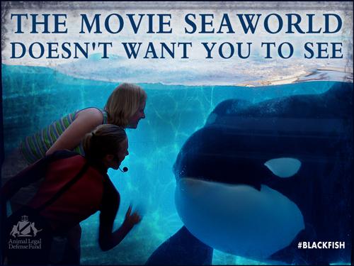 "Blackfish"" Backlash: SeaWorld Fights Back | Loyola Digital ..."