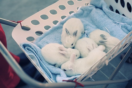 adorable-animals-baby-basket-bunny-Favim.com-345802